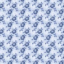 hibiscus azul