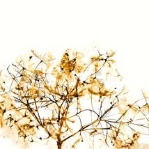 transparecia de flores