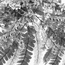 arboleda botanica gris