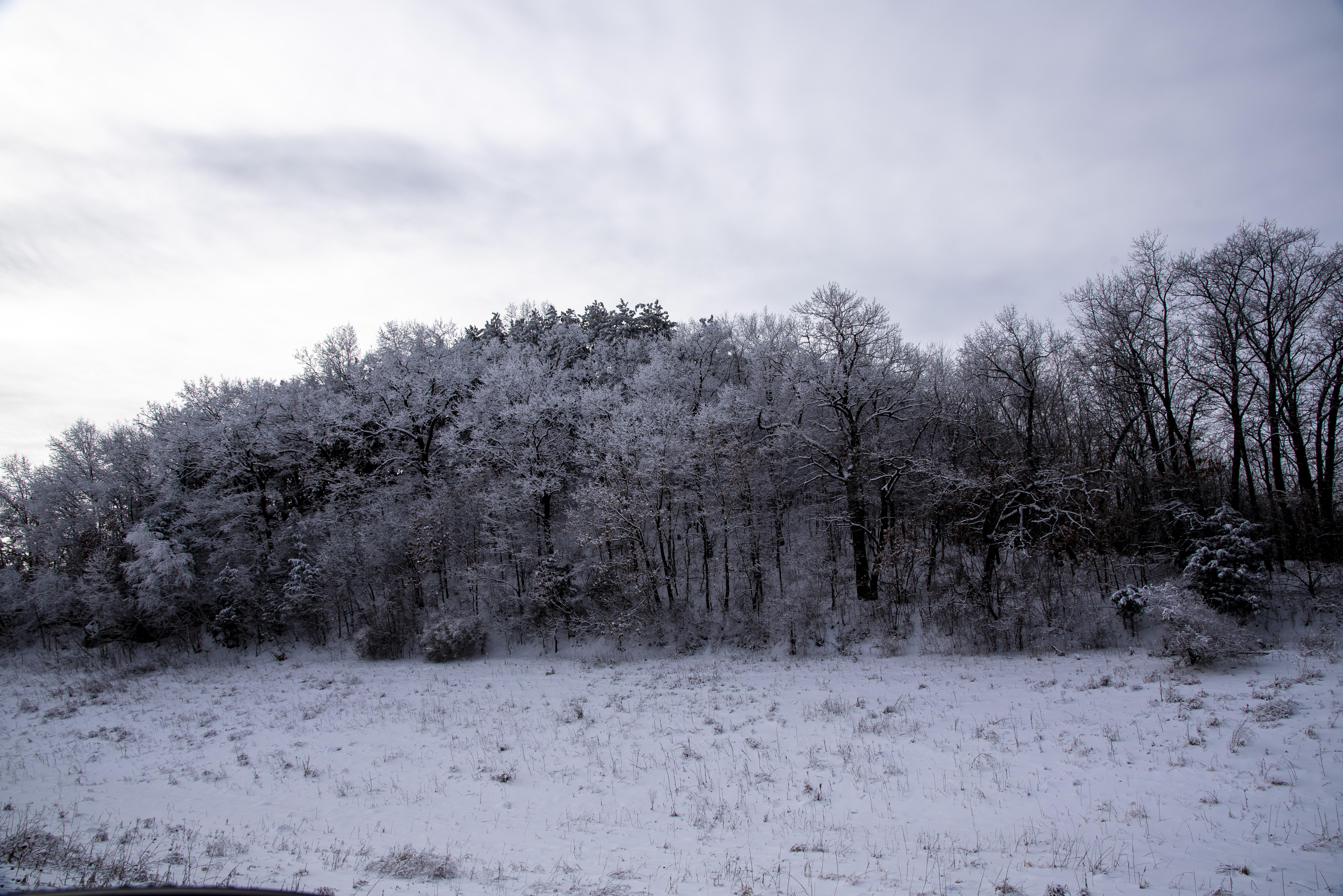 treessnow