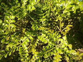 leaves-etc-003.jpg