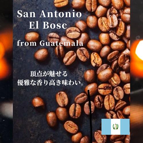 国際品評会授賞 COE San Antonio El Bosc Guatemala サンアントニオエルボスク フロム グアテマラ(豆60g)