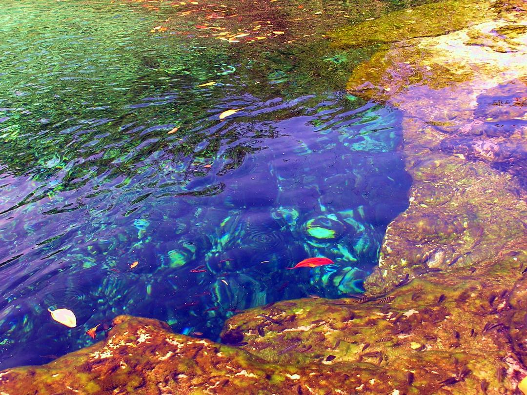 Fishes in the Cenote