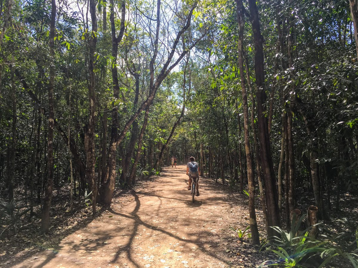 Coba Maya Jungle