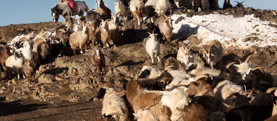Herds like locusts