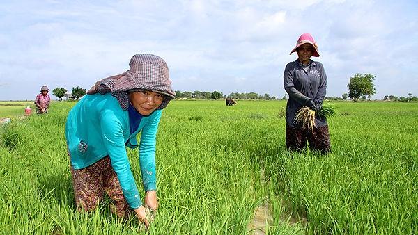 cambodia-agr.jpg