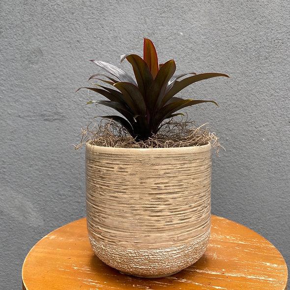 Dracena & Vaso Decorativo