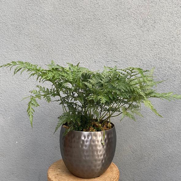 Renda Francesa & Vaso Metal