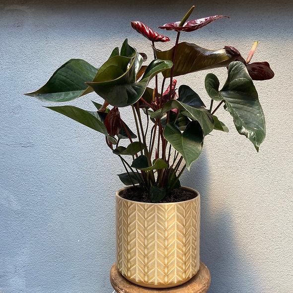 Anthurium  & Vaso Decorativo