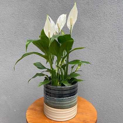 Mini Lírio & Vaso Decorativo
