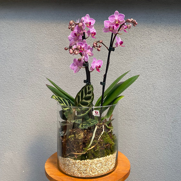 Arranjo Mini Orquídea & Maranta