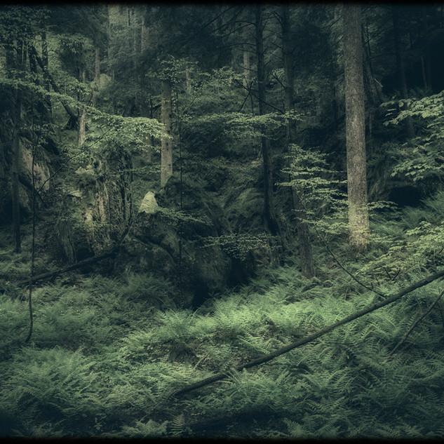 Old Forrest
