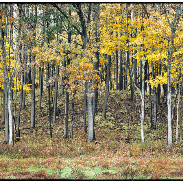 Fall trees at Firestone Metropark