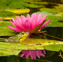 Frog and Damselfly