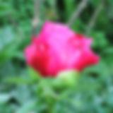 IMG_3031.jpg