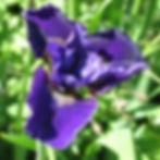 prussian blue6.jpg