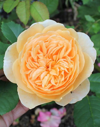 crown princess margareta8.jpg