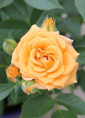 clementine2.jpg