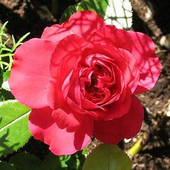 rouge leonard de vinci3.jpg