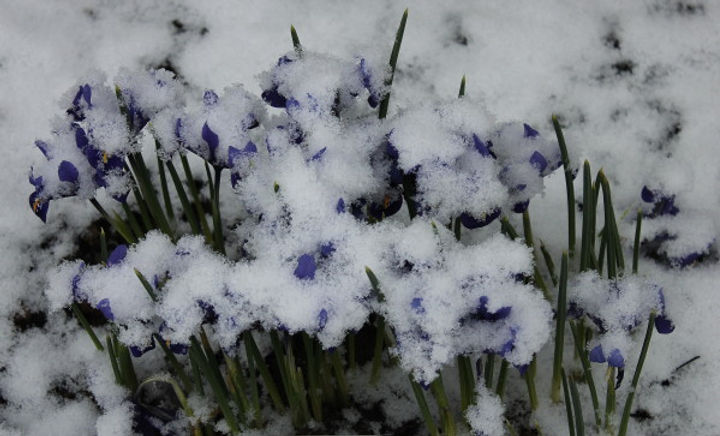 toppbilde vaar:vinter1.jpg