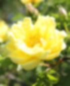 williams double yellow8-kopi.jpg