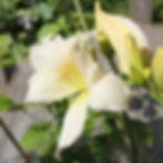 serena madonna3.jpg