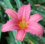 pink damask8.jpg