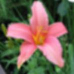 pink damask5.jpg