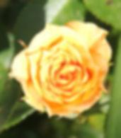 clementine5.jpg