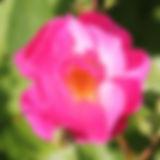 lavender dream10.jpg