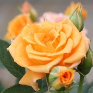 clementine4.jpg