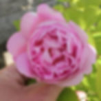 mary rose4.jpg