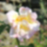 IMG_6652.jpg