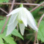 white moth9.jpg