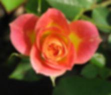 mini mandarin5.jpg