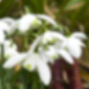 flore p.jpg