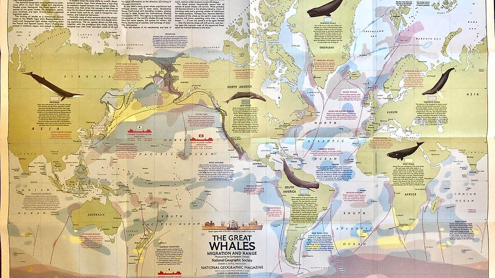 National Geographic 1970s Map - The Great Whales