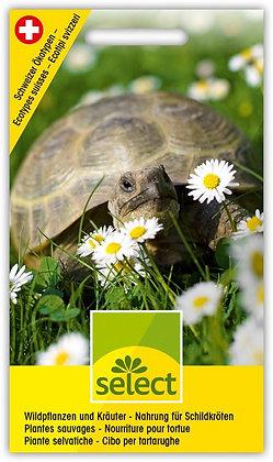 Select-Saamen Wildpflanzen und Kräuter - Nahrung für Schildkröten