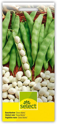 Select-Saamen Buschbohne 'Coco blanc'