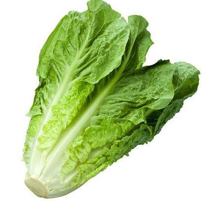 Lattich grün