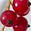Thumbnail: Johannisbeeren 'Rolan'  (HÄ)