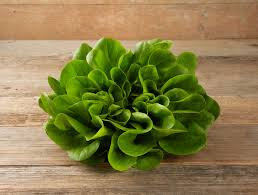 Salanova Kopf grün