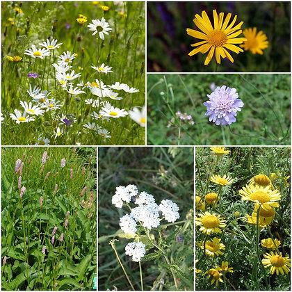 Blumenwiese-Set