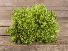 Salanova Crisp grün