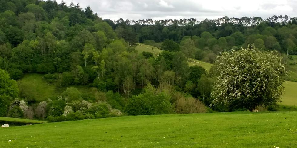Nature Walk & Yoga in Miserden Park & Estate