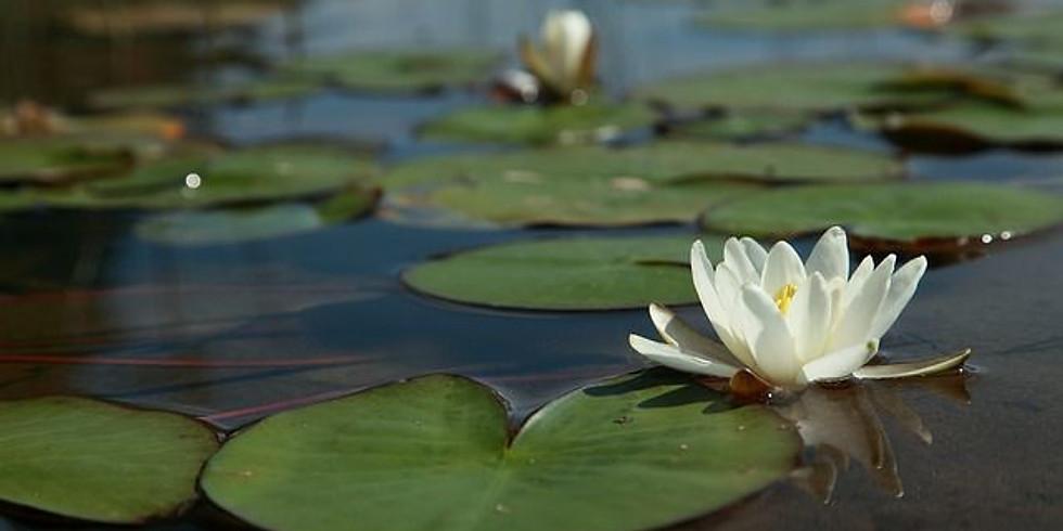 Restorative Yoga Monthly