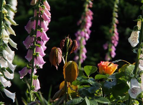 Сад-огород как анти-стресс терапия