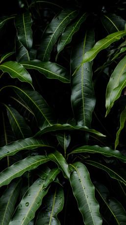 planty.jpeg