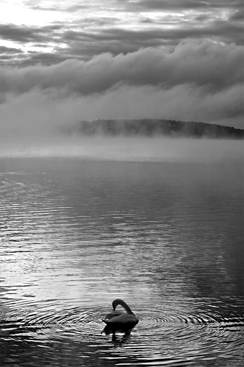 Svanen - Posterperfect featuring Jenny Wande