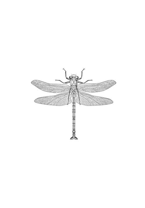 Affisch - Bug 04